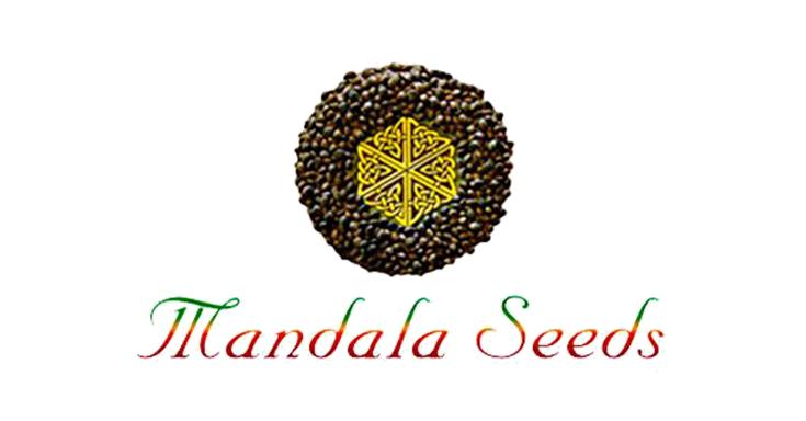 5 лучших сортов от mandala seeds